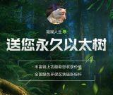 以太森林排线:以太森林是什么项目