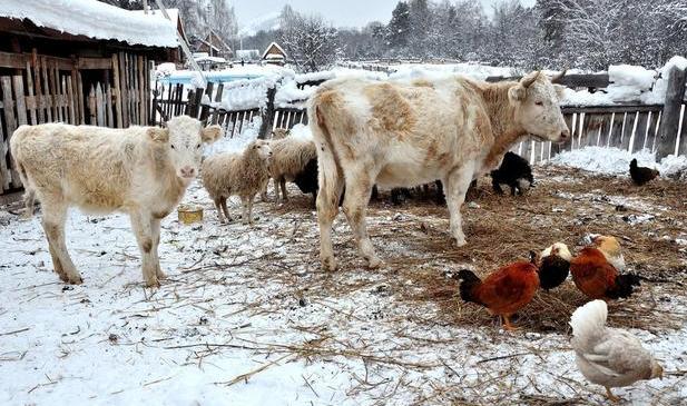 在农村最赚钱的3种养殖业,想养殖的可以试试.png