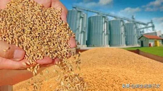 今年种什么农作物最赚钱?农村人不知道收益高的种植项目