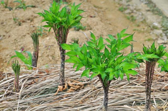 种植什么最赚钱?这6个种植赚钱项目很适合农村创业